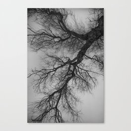 Lungs of the Earth | Nature Photography | Weeping Willow | Black and White | black-and-white | bw Canvas Print