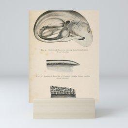 W Sidney Berridge - A Book of Whales (1900) - Figures 5-7 Porpoise Embryo, Dorsal Fin and Skin Mini Art Print