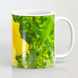 Yellow Reblooming Daylilly Coffee Mug