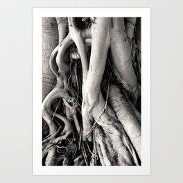 Root Of The Root Art Print