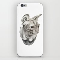 sphynx iPhone & iPod Skins featuring Sphynx  by KittyHatesIt