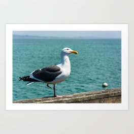 Seagull in Capitola Art Print