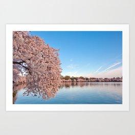 Washington DC Cherry Blossoms Art Print