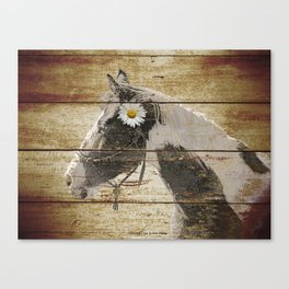 Daisy Flower on Rustic Brown Cream Horse Country Barn Art A166 Canvas Print