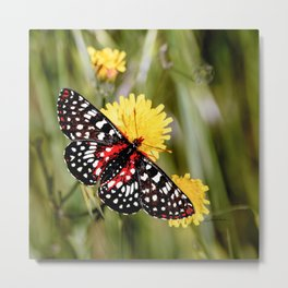 A Red Dotted Checkerspot Metal Print