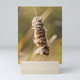 Cattail Scruff. Photograph Mini Art Print