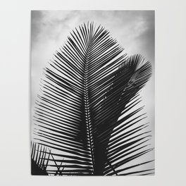 Tropical Palm Leaf Black and White Poster