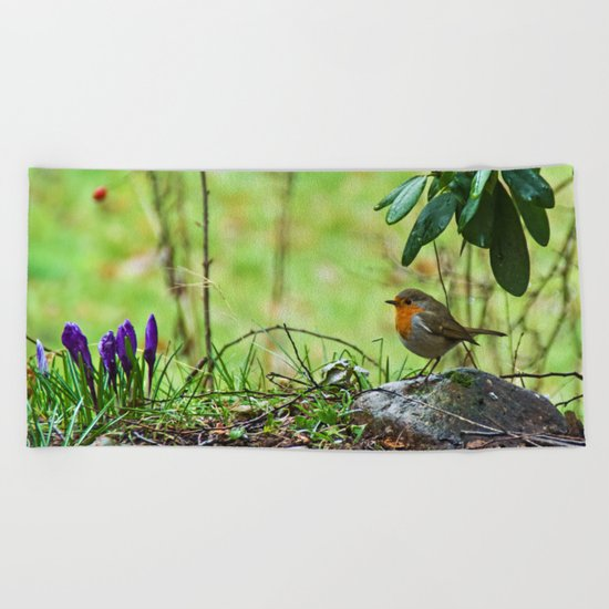 Robin in the spring Beach Towel