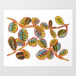 Maranta Art Print