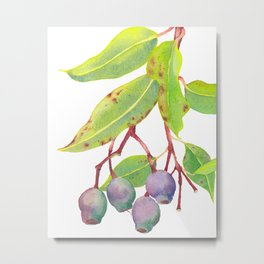 Gumnuts - Watercolour Metal Print