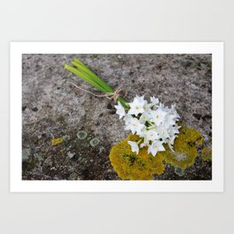 Bunch of narcissi Art Print