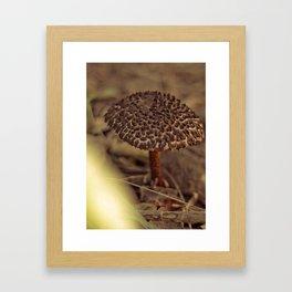 Shroom2 Framed Art Print