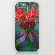 Scarlet Bee Balm {Monarda didyma L.} Slim Case iPhone 6s