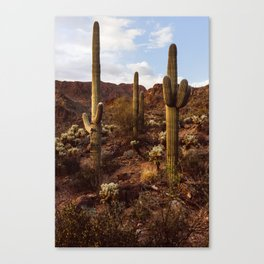 Three Caballeros Canvas Print