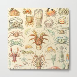 Sea Creatures // Crustaces by Adolphe Millot XL 19th Century Science Textbook Diagram Artwork Metal Print