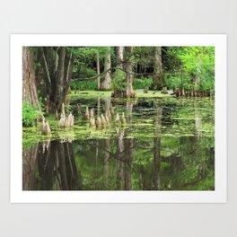 Swamp Art Print