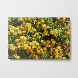 Blooming Lantana Plant Metal Print