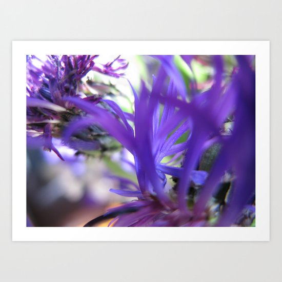 Purple Petals 75 Art Print