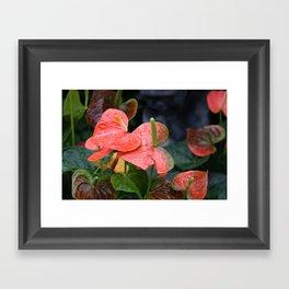 Anthurium Framed Art Print