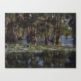 Beautiful Swamp and Cypress Canvas Print