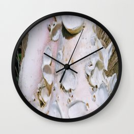 Ancienne conque Wall Clock