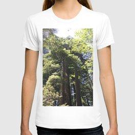 Redwood Treetops T-shirt