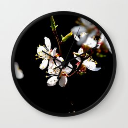 Small Twig Of A Japanese Apricot Tree. White Sunlit Flowers. Black Background Wall Clock