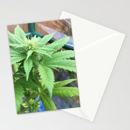 Cannabis and Mantis Stationery Cards