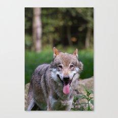 Canis Lupus Lupus III Canvas Print