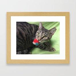 Adoptable Playful Tabby Cat, Pete Framed Art Print