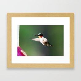 Humming Bird Framed Art Print