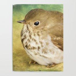 Bird Art - Patiently Waiting Poster