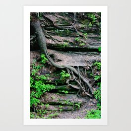 root growth. Art Print