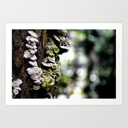 Tree Buds Art Print