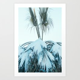 Palm and Snow Art Print