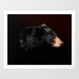 Young Black Bear Portrait Art Print