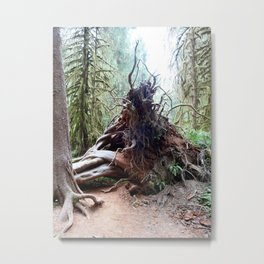 Hoh Rain Forest 3 Metal Print