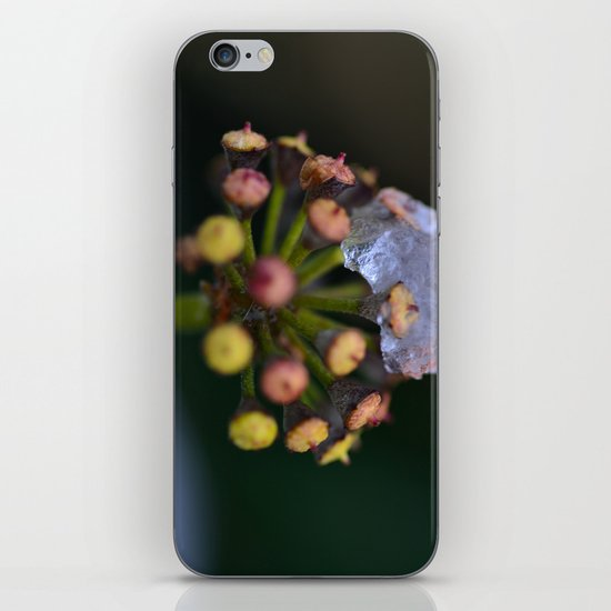 Snow On The Wild Ivy iPhone & iPod Skin