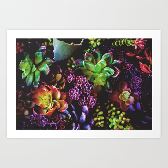 Colorful Succulent Plants Art Print