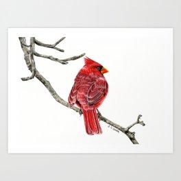 Winter Cardinal On White Art Print