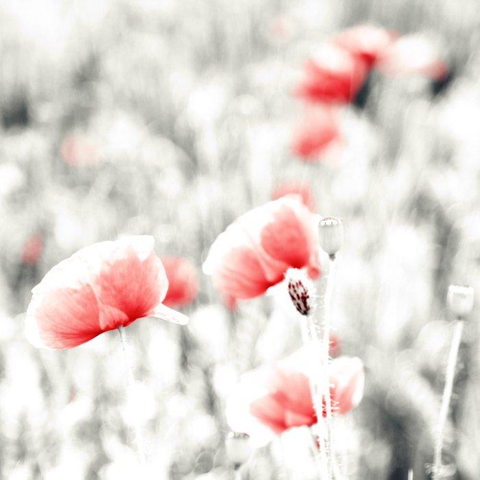 Poppy Poppies Mohn Mohnblume Flower Duvet Cover