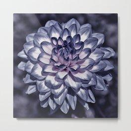 Blooming in purple Metal Print