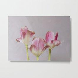 Tulip trio Metal Print