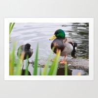 Little Duck and Mr. Big Art Print