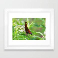 Dream Butterfly peacock Framed Art Print