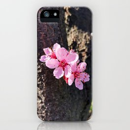 South Portland Spring 2018 (2) iPhone Case
