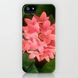 Red Rubiaceae Flower iPhone Case