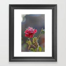 Rose in the frost Framed Art Print