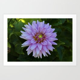 Delectable Dahlia- horizontal Art Print