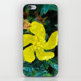 Small yellow flower with water drops iPhone Skin